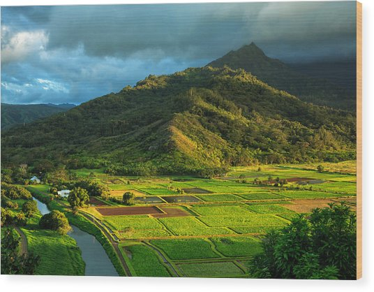 Hanalei Valley Taro Fields Wood Print