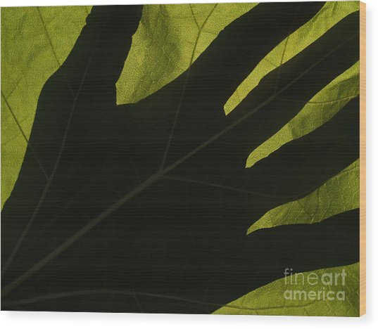Hand And Catalpa Veins Backlit Wood Print by Anna Lisa Yoder