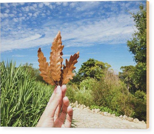 Hand Holding A Beautiful Oak Leaf Wood Print
