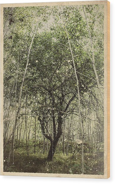 Hand Of God Apple Tree Poster Wood Print
