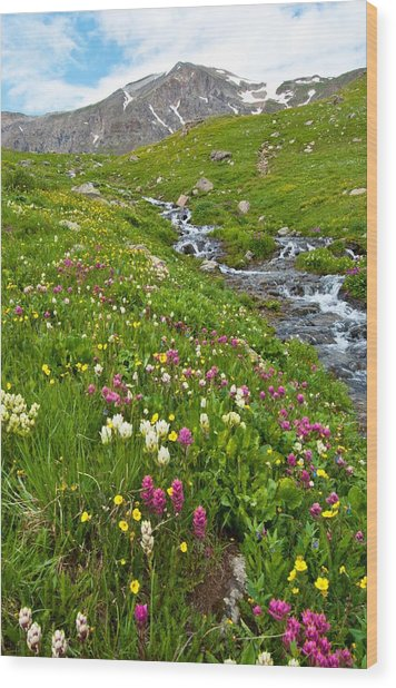 Handie's Peak And Alpine Meadow Wood Print