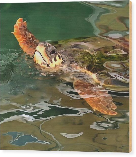 Hands Up For A Plastic Free Ocean Loggerhead Turtle Wood Print