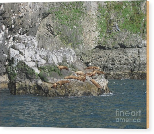 Hanging Out In Alaska Wood Print