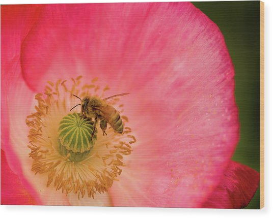 Happy Bee Wood Print