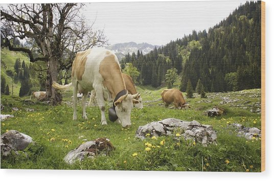 Happy Cows In High Pastures Wood Print