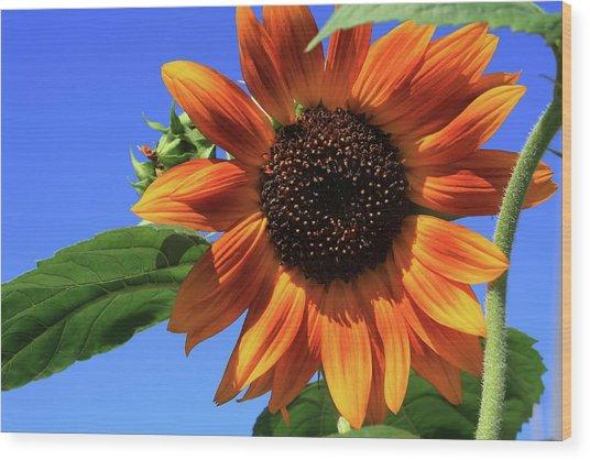 Happy Days Of Summer Wood Print