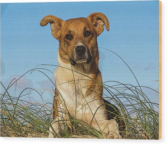 Happy Dog At The Beach Wood Print