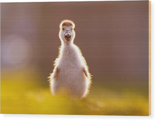 Happy Easter - Cute Baby Gosling Wood Print