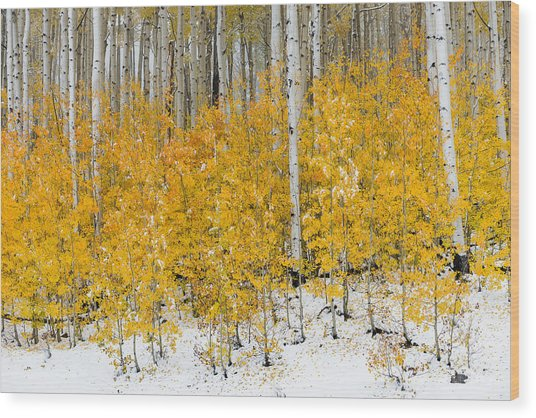 Wood Print featuring the photograph Happy Fall by Chuck Jason