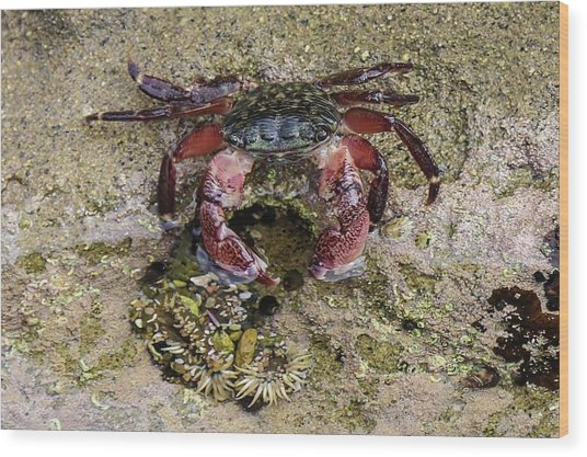 Happy Little Crab Wood Print