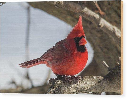 Happy Mister Cardinal Wood Print