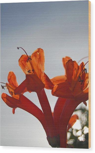Happy Orange Wood Print by Jean Booth