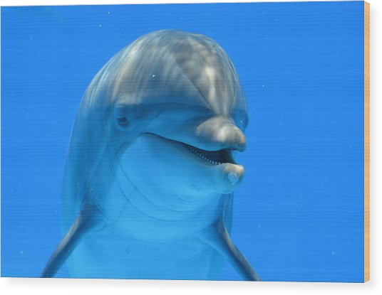 Happy Smiling Dolphin Wood Print