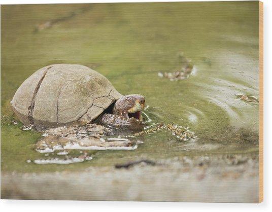 Happy Turtle Wood Print