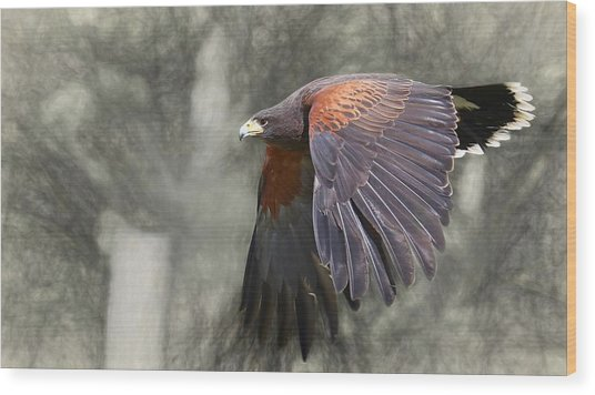 Harris Flight Wood Print