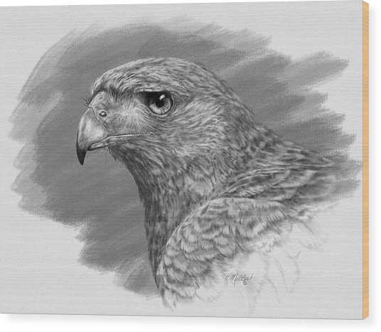 Harris Hawk Drawing Wood Print