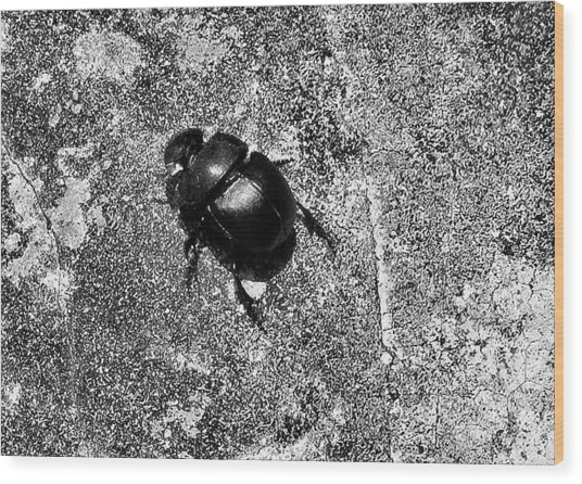 Harsh Life Black White Life Is Dung Beetle Card Wood Print by Kathy Daxon