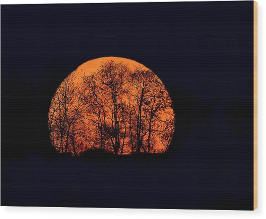 Harvest  Moon Rising Wood Print