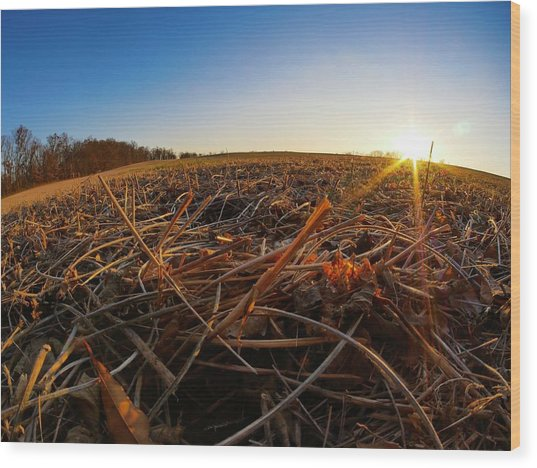Wood Print featuring the photograph Harvest by Ryan Shapiro