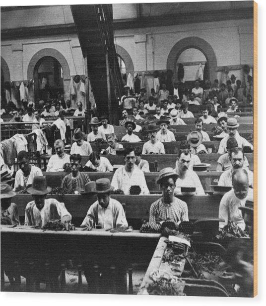 Havana Cuba - Cigars Being Rolled - C 1903 Wood Print