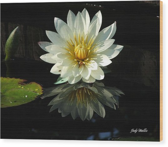 Haven Hospice Water Lily Wood Print by Judy  Waller
