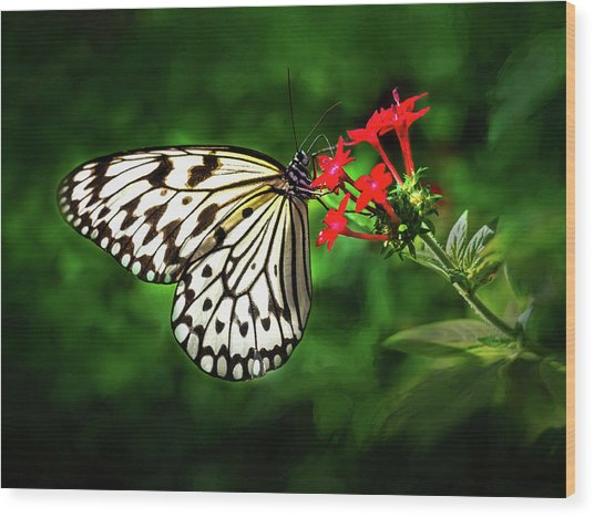 Haven't You Noticed The Butterflies? Wood Print