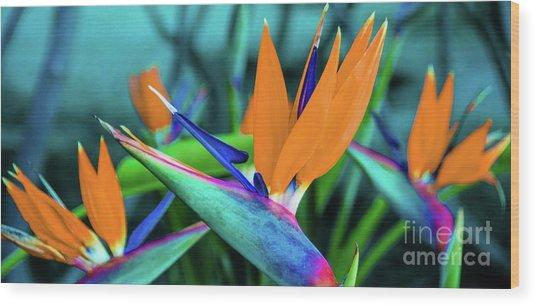 Hawaii Bird Of Paradise Flowers Wood Print