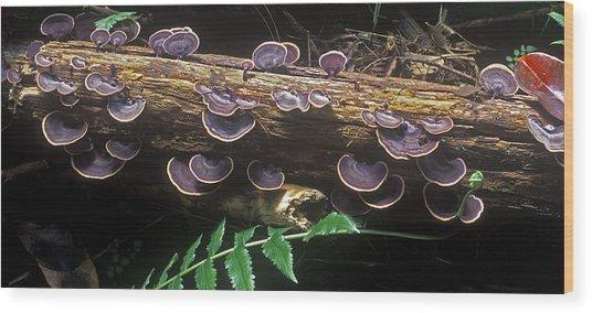 Hawaii Flora 14 Wood Print by Charlie Osborn