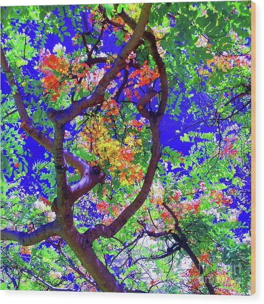 Hawaii Shower Tree Flowers In Abstract Wood Print