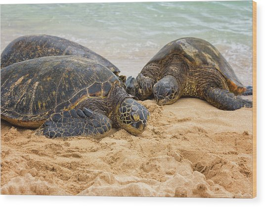 Hawaiian Green Sea Turtles 1 - Oahu Hawaii Wood Print