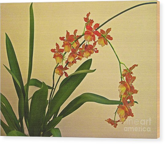 Hawaiian Orchid Spray Wood Print
