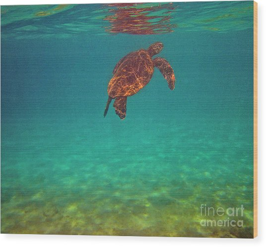 Hawaiian Sea Turtle - Floating Wood Print