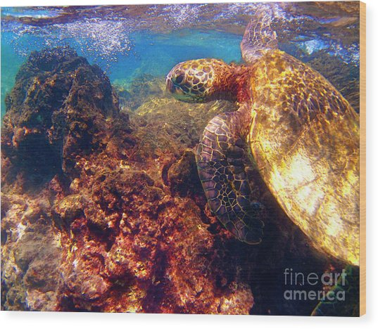 Hawaiian Sea Turtle - On The Reef Wood Print