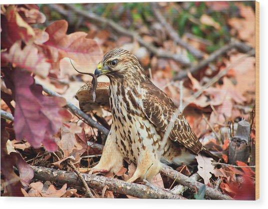 Hawk Catches Prey Wood Print