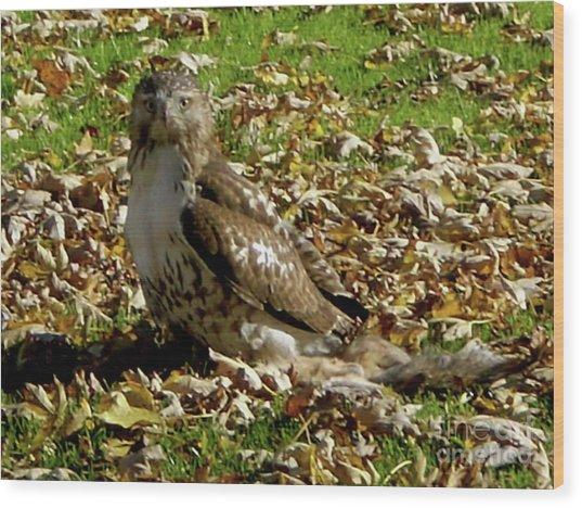 Hawk Falling Leaves Wood Print
