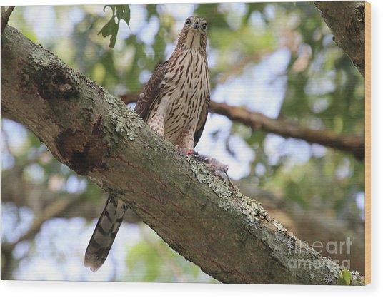 Hawk On A Branch Wood Print