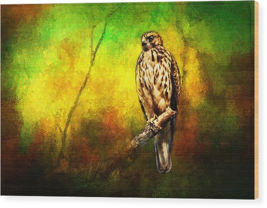 Hawk On Branch Wood Print