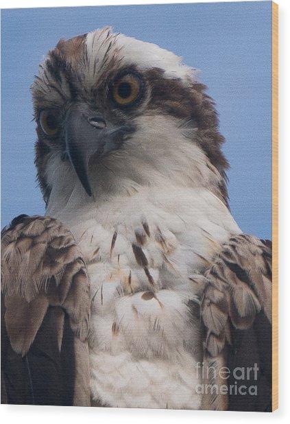 Hawk Profile Wood Print