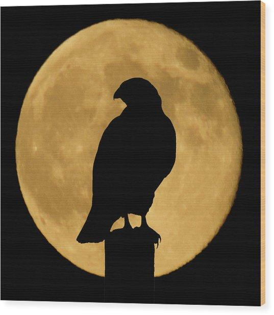 Hawk Silhouette 2 Wood Print