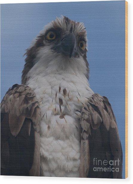 Hawk Stare Wood Print