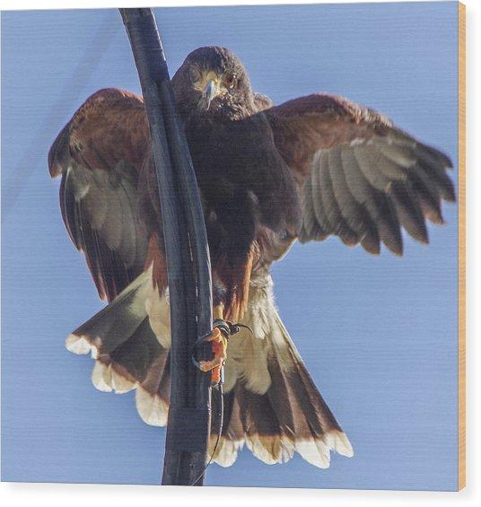 Hawk Watch 6 Wood Print