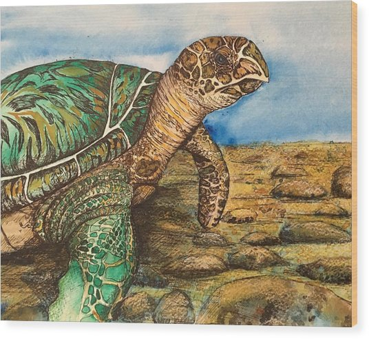 Hawkbilled Sea Turtle Wood Print