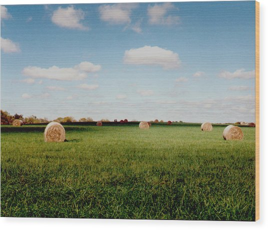 Hay Fields Wood Print