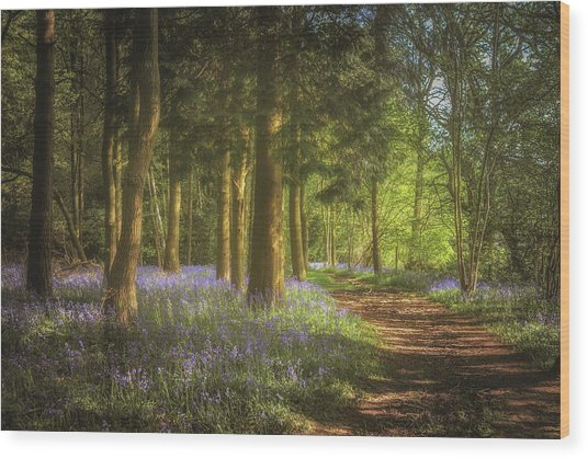 Hay Wood Bluebells Wood Print