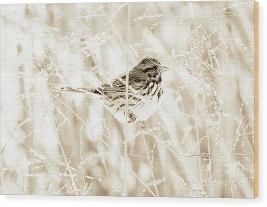 He Feeds The Sparrows Wood Print