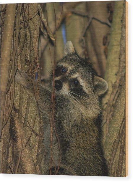 He Found My Nook Wood Print