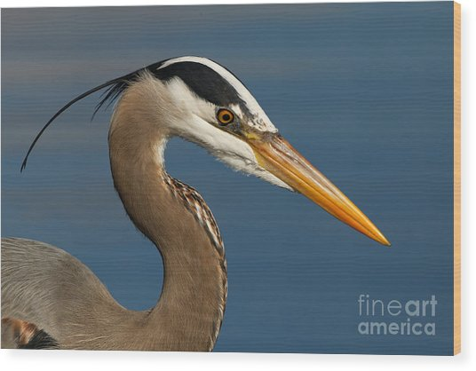 Head Of A Great Blue Heron Wood Print