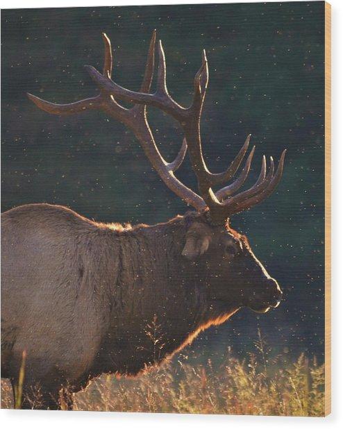 Head Of The Herd Wood Print