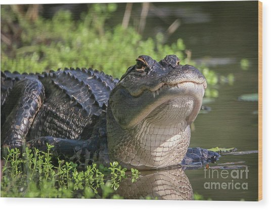 Heads-up Gator Wood Print