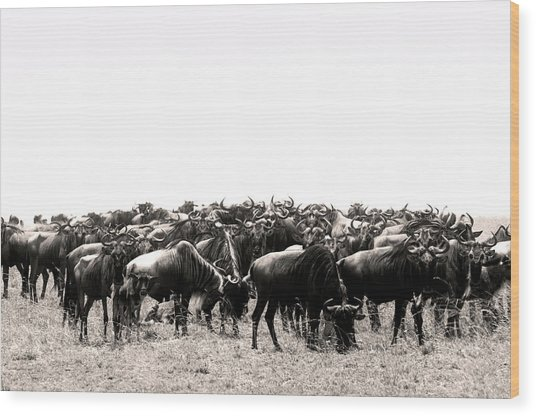 Wood Print featuring the photograph Herd Of Wildebeestes by Stefano Buonamici
